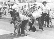 flyball5
